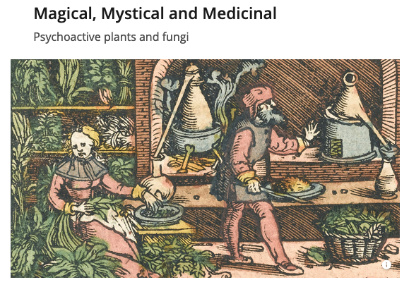 Magical, Mystical and Medicinal